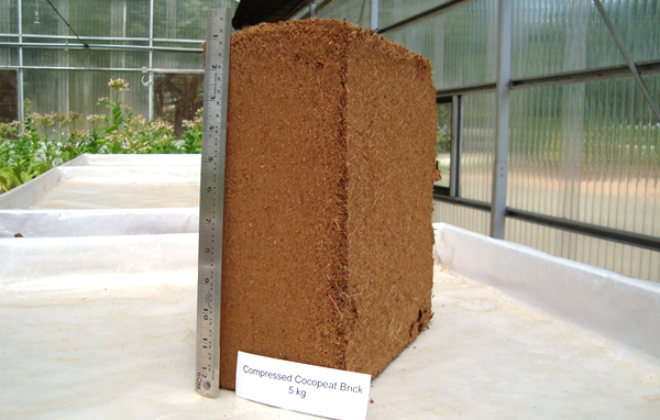 Compressed cocopeat bales - SV Corexports